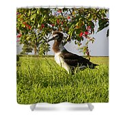 Albatross 1 Shower Curtain