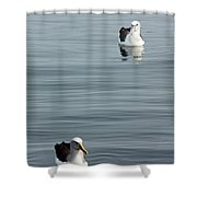 Albatross Shower Curtain