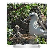 Albatross Mom And Baby Shower Curtain