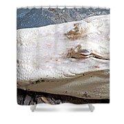 Albino Alligator Shower Curtain
