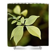 Albino Branch Shower Curtain