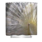 A Leucistic Peacock Shower Curtain
