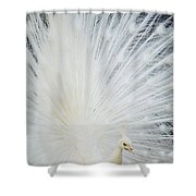 Albino Peacock Shower Curtain