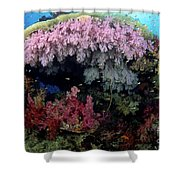 Alcyonarian Coral - Fiji Shower Curtain