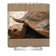 Aldabra Tortoise Shower Curtain