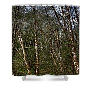 Alders At Camp 18 Shower Curtain