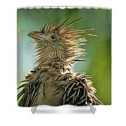 Alert Bird Shower Curtain