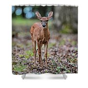Alert Fawn Deer In Shiloh National Military Park Tennessee Shower Curtain
