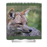 Alert Fox  Shower Curtain