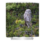 Alert Great Gray Owl Shower Curtain