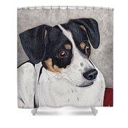 Alert Little Rat Terrier  Shower Curtain
