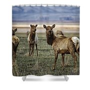 Alert On The Home Front Shower Curtain