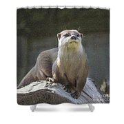 Alert Otter Amblonyx Cinerea Shower Curtain