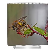 Alfalfa Bee Shower Curtain