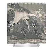 Alfie Shower Curtain