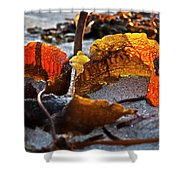 Algae At Low Tide Shower Curtain by Heiko Koehrer-Wagner