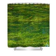 Algae Shower Curtain