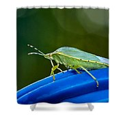 Alice The Stink Bug 2 Shower Curtain