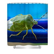 Alice The Stink Bug 3 Shower Curtain