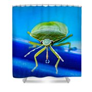 Alice The Stink Bug 4 Shower Curtain
