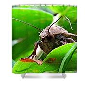 Alien Moth Shower Curtain