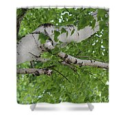 All About Trees Shower Curtain