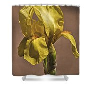 All About Yellow Shower Curtain