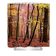 All Fall Shower Curtain