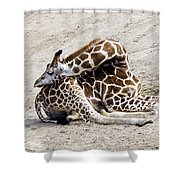 All Folded Up Shower Curtain