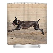 All Four Off The Ground Shower Curtain