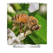 All In, Apis Mellifera Shower Curtain