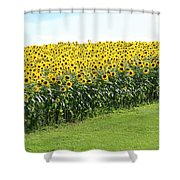 All Lined Up Shower Curtain