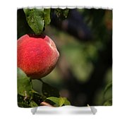 All Natural Peach Shower Curtain