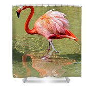 All Ruffled Up Shower Curtain