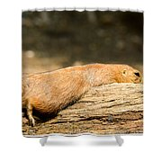 All Stretched Out Shower Curtain