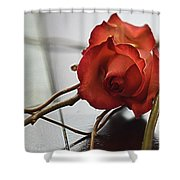 All Tangled Up Shower Curtain