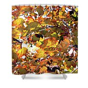 All The Leaves Are Red And Orange Fall Foliage With Sunshine Shower Curtain