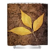 All Things Must Pass Shower Curtain