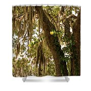 Allamanda And Oak Tree Shower Curtain