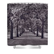 Allee Way Bw Shower Curtain