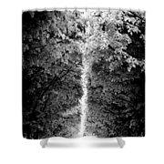 Allee_des_arbres Shower Curtain