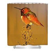 Allen's Hummingbird II Shower Curtain