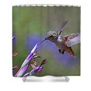 Allen's Hummingbird Shower Curtain