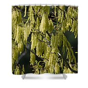 Allergies Shower Curtain