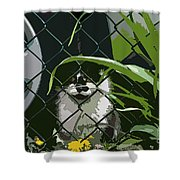 Alley Cat Shower Curtain
