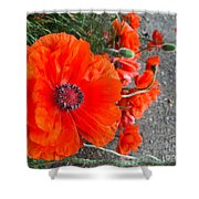 Alley Orange Red Poppies  Shower Curtain