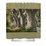 Alley Provence  Shower Curtain