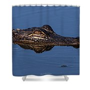Alligator 17 Shower Curtain