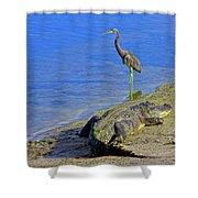 Alligator And Blue Heron Shower Curtain