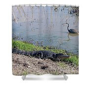 Alligator And Heron Shower Curtain
